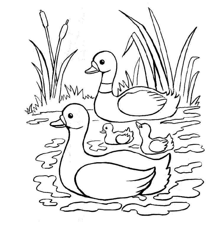 kleurplaat eend  vijver sloten  Pinterest  Ducks Animaux and Php