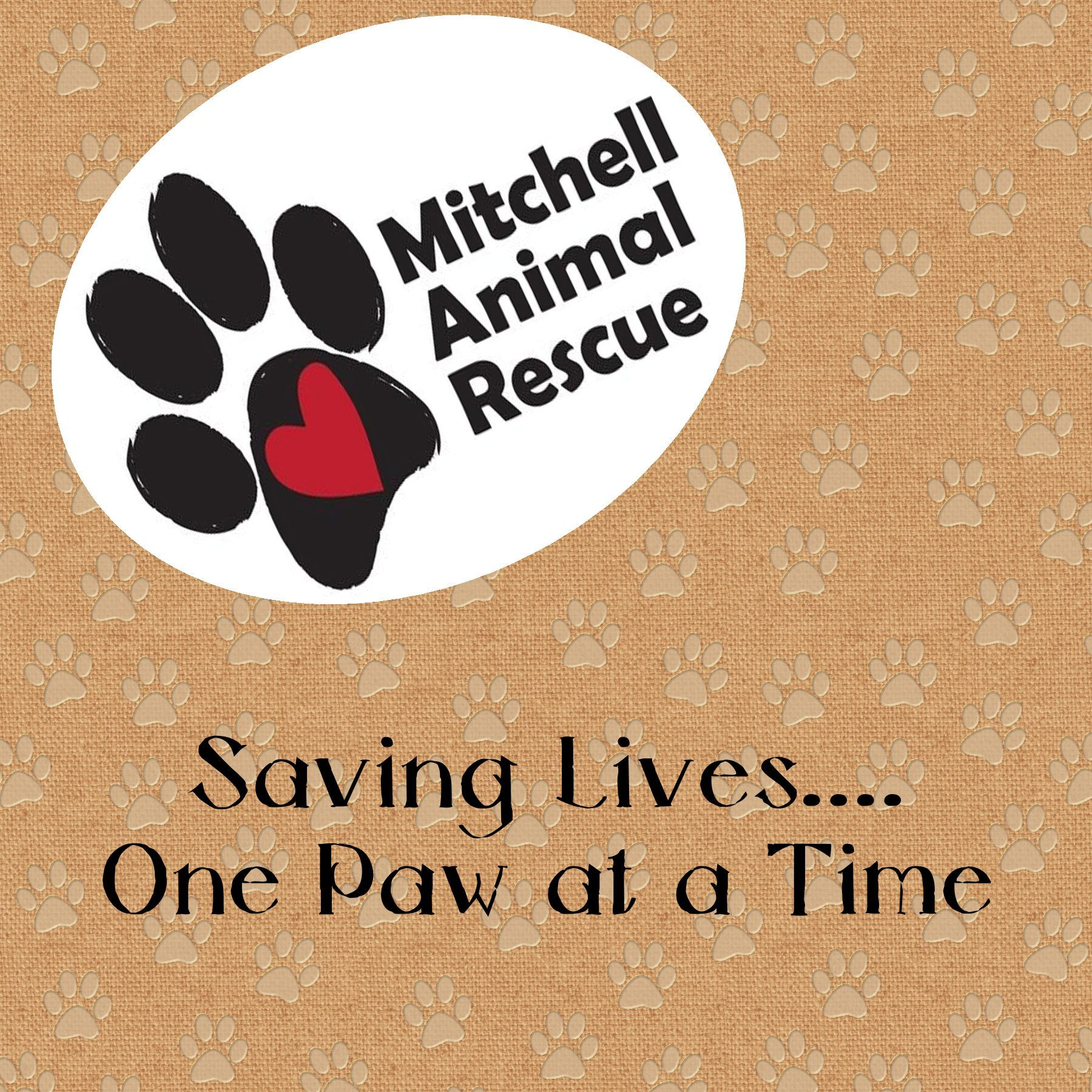 Let a rescue animal save YOUR life! Animal rescue