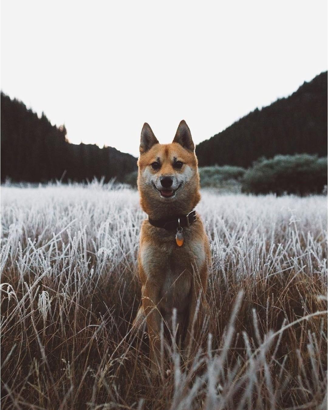 Photo Josh Neff dogsarethebest (mit Bildern)