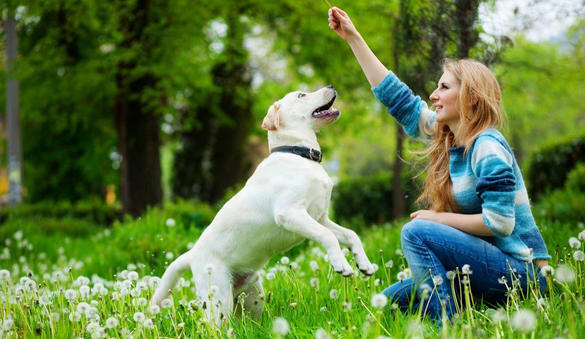 Pessoa Com Cachorro No Sofa 的图片搜索结果 狗子 Dogs Dog Training Tips Dogs Puppies