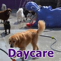 Woof Dah Dog Doggie Daycare And No Cage Boarding New Clients