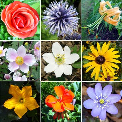 Below We Have Listed 100 Diffe Types Of Flowers And Their Names Which Florists Often Use To Help You Understand The Common Are
