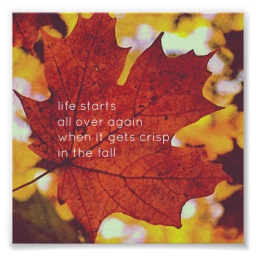 Autumn Leaves Fall Quote Poster Zazzle Com Quote Posters Poster Autumn Quotes