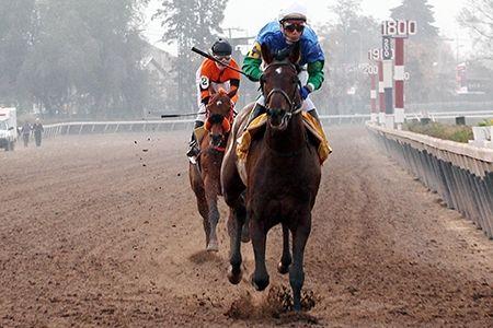 Briosso (CHI) 2008 B.h. (Victory Gallop (CAN)-Biosca (CHI) by Barkerville (USA) 1st Premio Libertador Bernardo O'Higgins Riquelme (CHI-G3,2000mD,Hipodromo Chile)