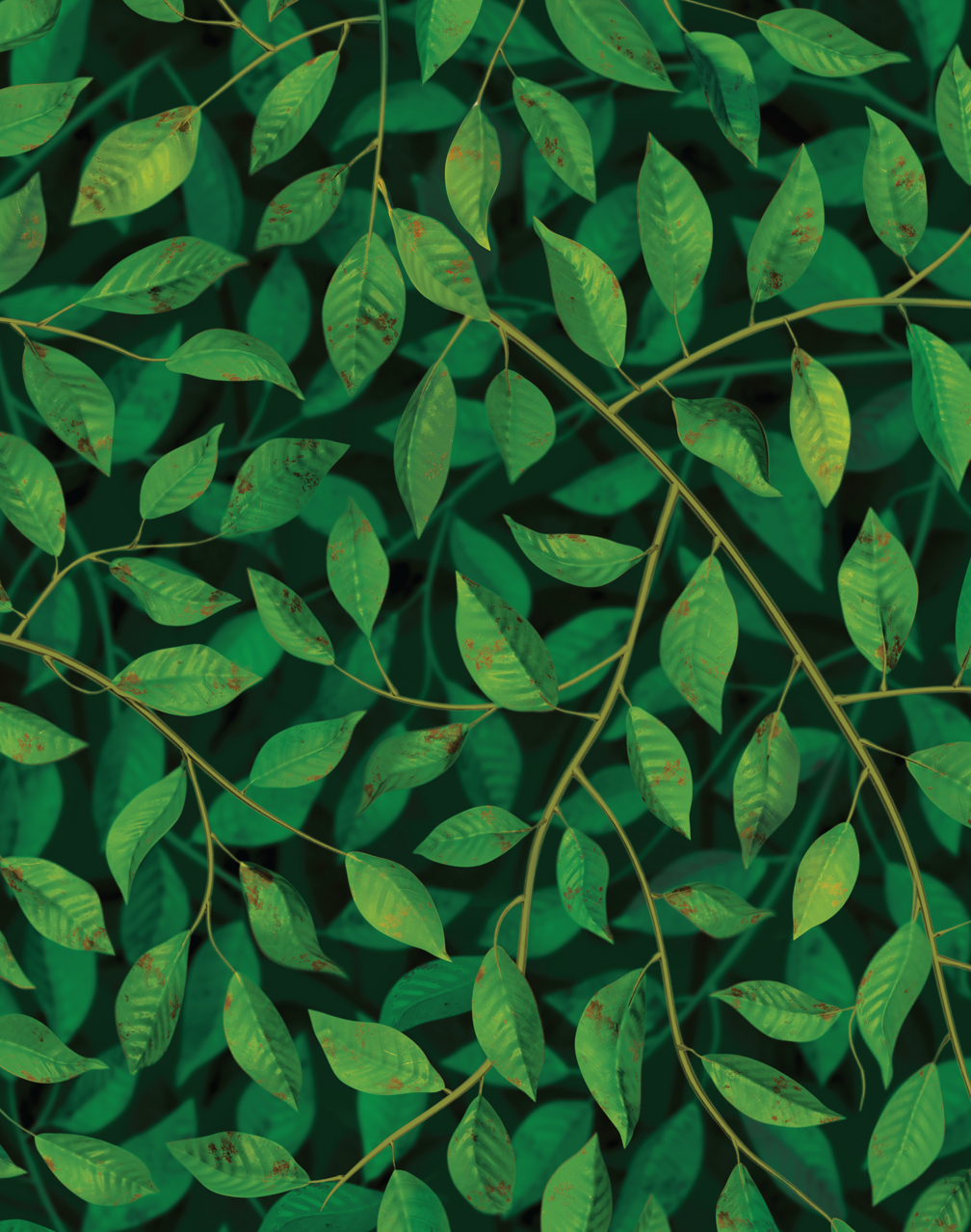 A Million Leaves Dark Green Floral Wallpaper Dark Green