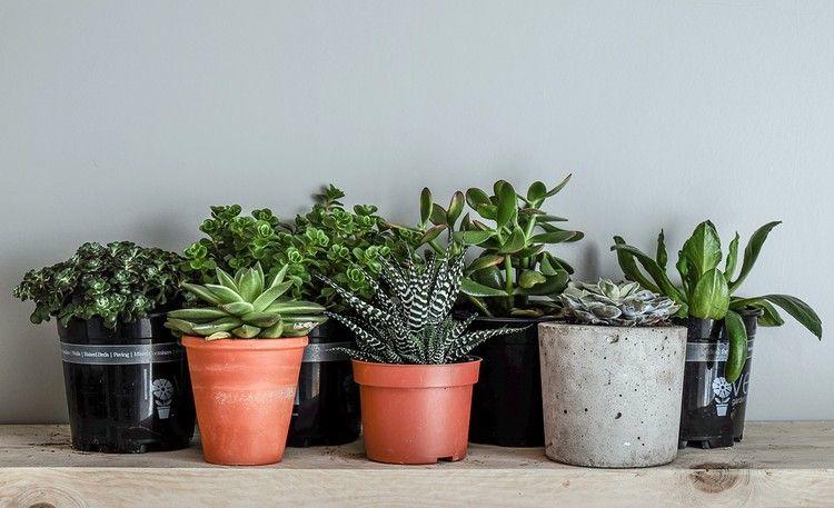 Diese Zimmerpflanzen Die Wenig Wasser Brauchen Eignen Sich Perfekt