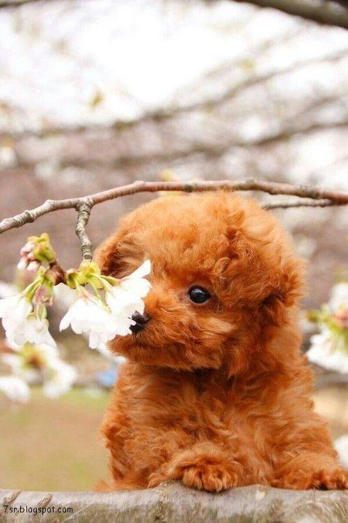 صور حيوانات Cute Animals Animals Animal Pictures