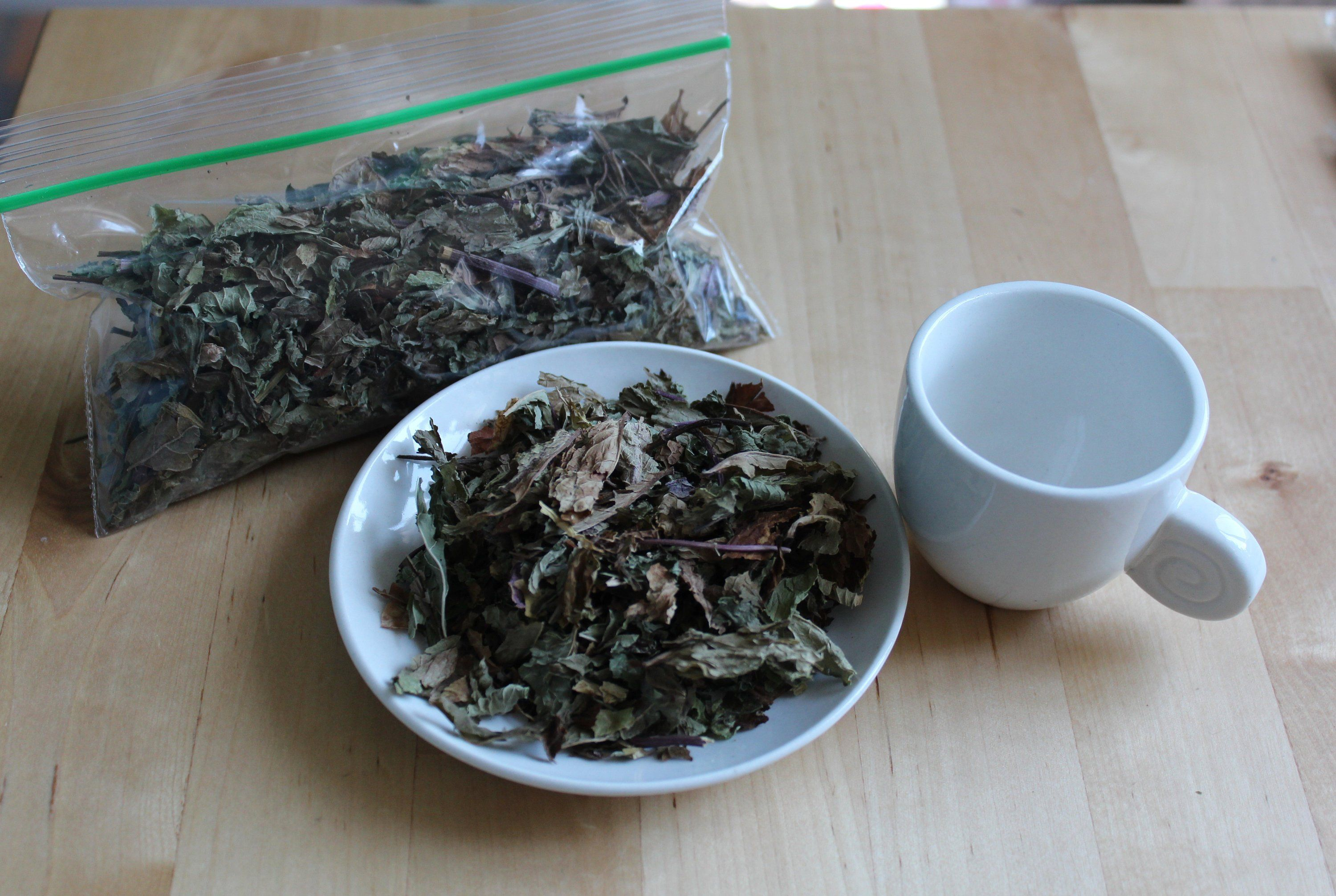 Home grown peppermint tea leaves dried etsy echinacea
