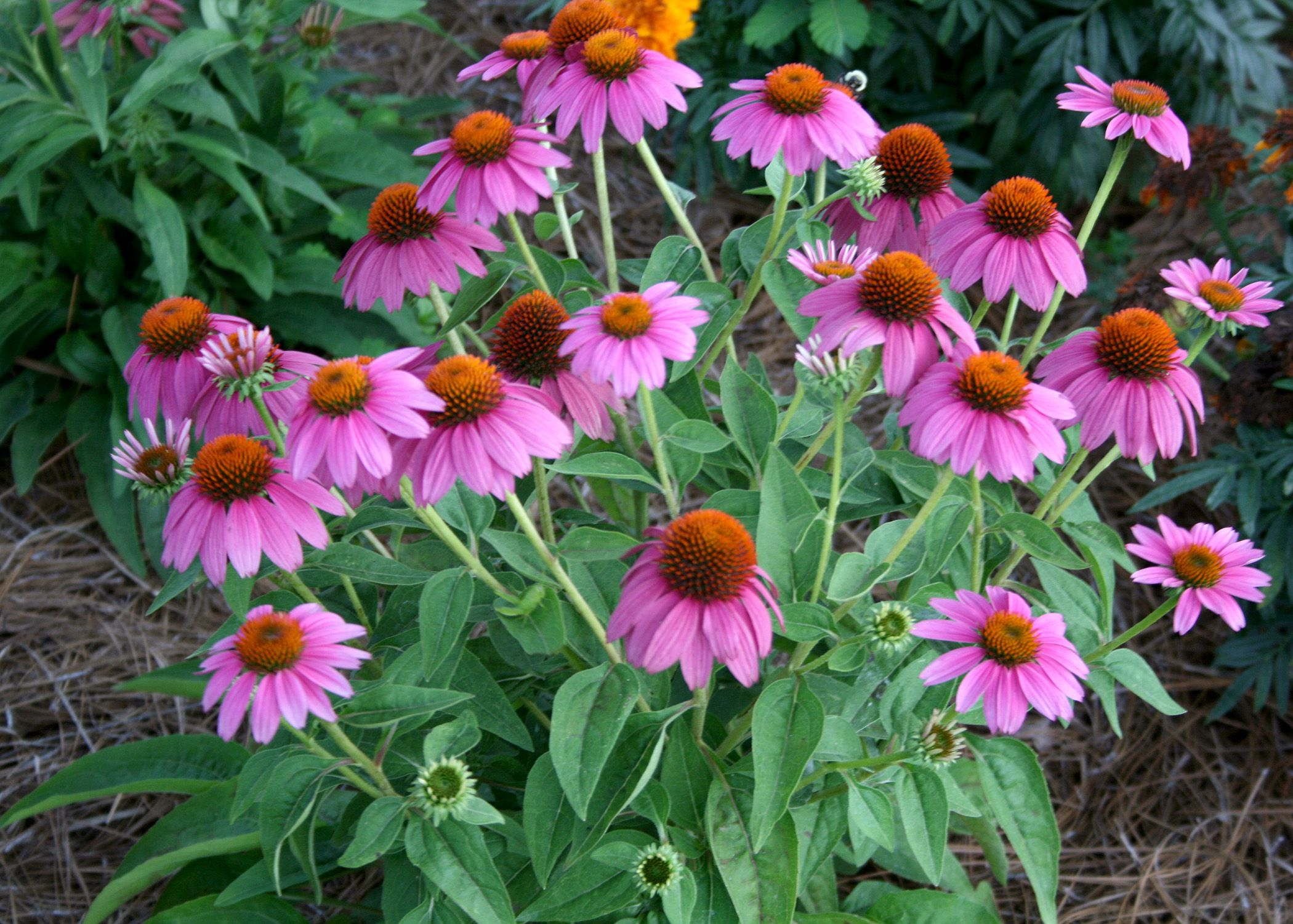 Medallion Winners Include Flower Fruit And Vegetable 02 10 2014 Perennial Garden Backyard Garden Backyard Garden Landscape