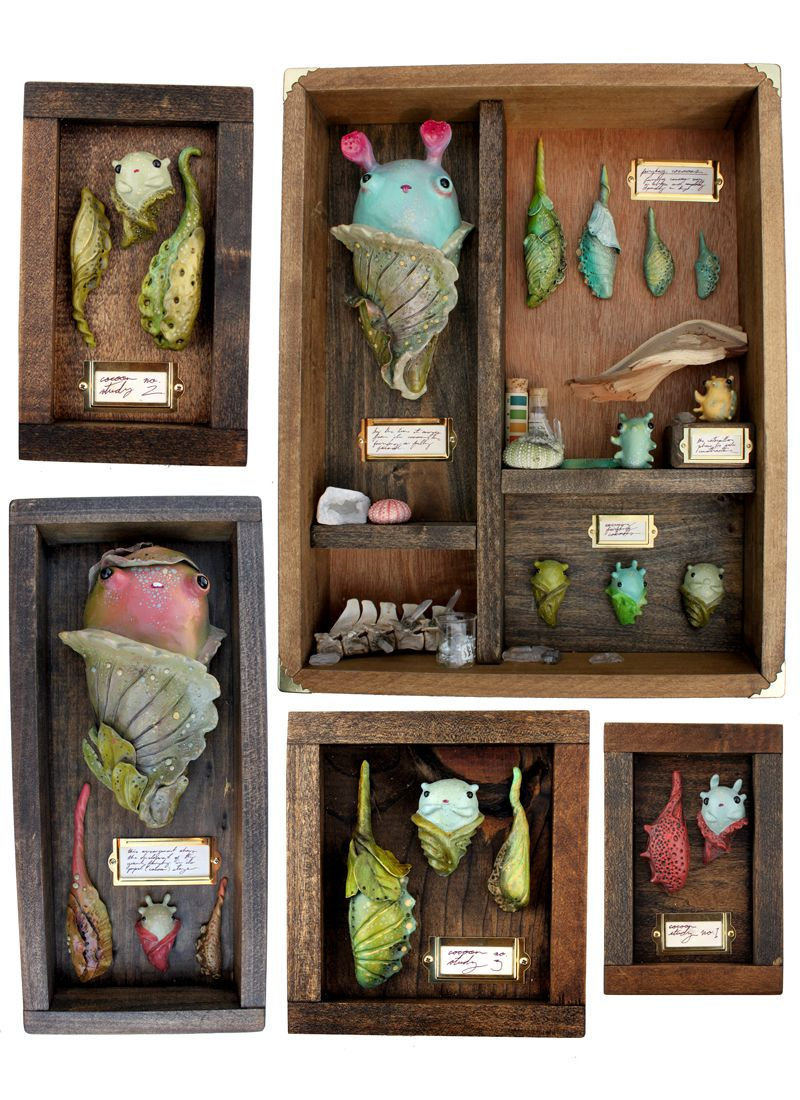 sawdustbear:Here's a preview of some of the cocoon collections I've been working on for Dubious Beasts: Life Cycles. I've posted them all before, but I really like this arrangement!I've been prodding at the idea of cabinets of curiosities for years…I've always loved and felt influenced by assemblage artists like Joseph Cornell and Robert Rauschenberg, and when I was a scenic designer, some of that layered, cluttered work came through in my designs when I got a chance. But, it wasn't until…