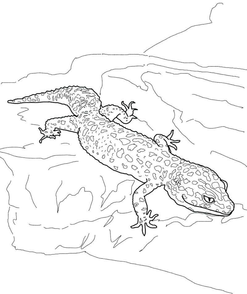 Gecko Coloring Pages Coloring Pages Coloring Pages For Kids Animal Coloring Pages