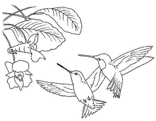 zwei kolibri | birds coloring | Pinterest | Ausmalbilder vögel ...