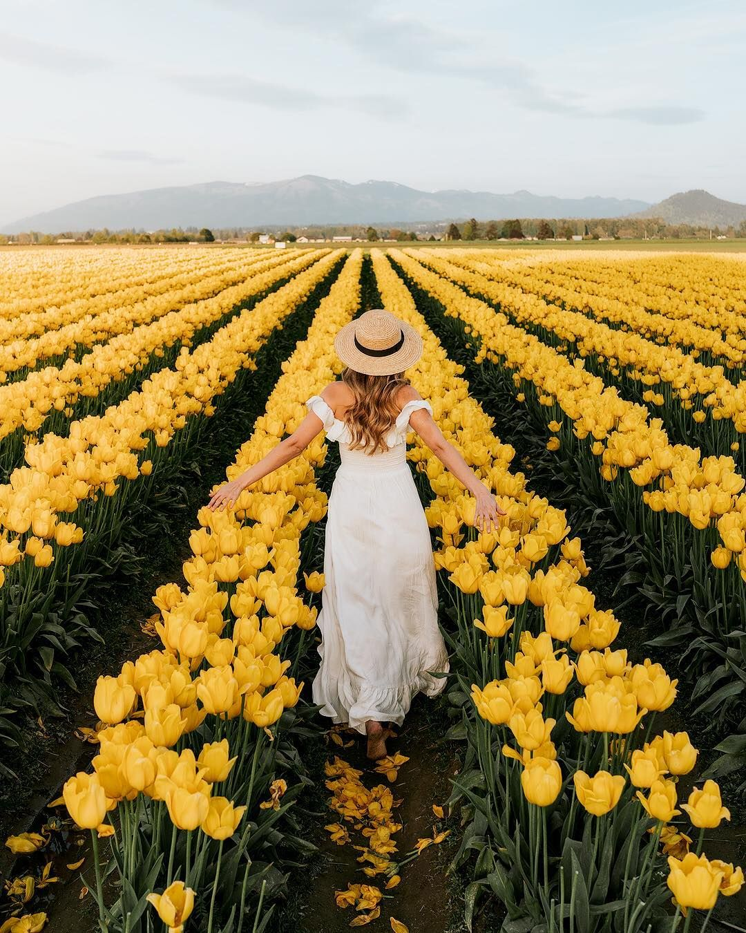 A Woman Stands In A Field Of Yellow Tulips Jaime Les Tulipes