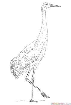 How To Draw A Sandhill Crane