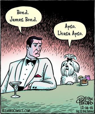 Bond James Bond Cartoon Shih Tzu Lhasa Apso Shih Tzu Puppy