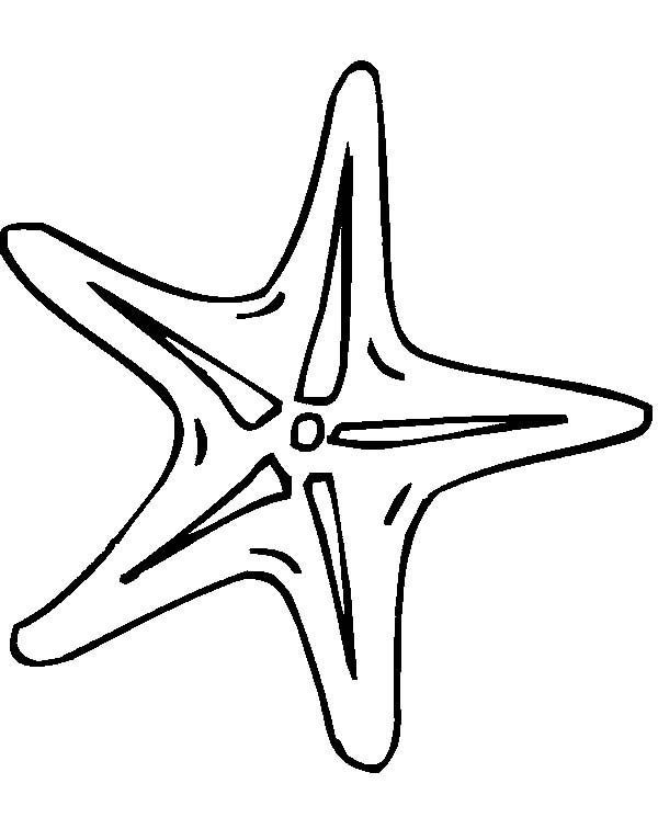 starfish clipart line drawing stairs pinterest drawings