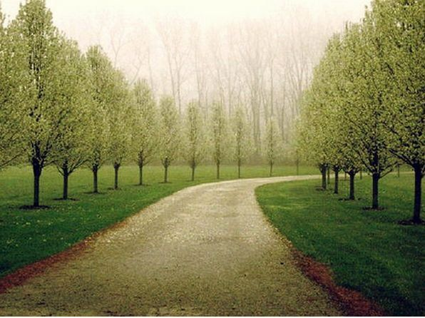 Tree Lined Drive I Love The Shape Of These Trees For Our Driveway Wondering If They Are A Type Driveway Landscaping Acreage Landscaping Tree Lined Driveway
