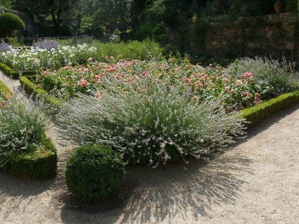 Design Archive Mein Mediterraner Garten Mediterraner Garten Garten Kiesgarten