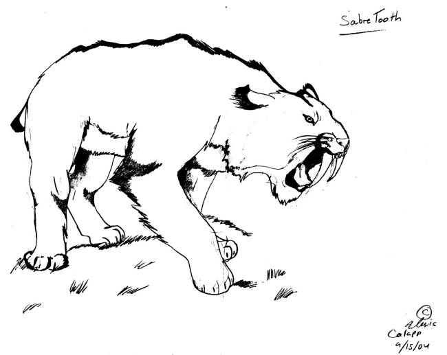 Smilodon Was Not The Only Saber Toothed Cat Another Species Was The Scimitar Cat Both Living At The End Of The Last I Sabertooth Coloring Pages Tiger Drawing