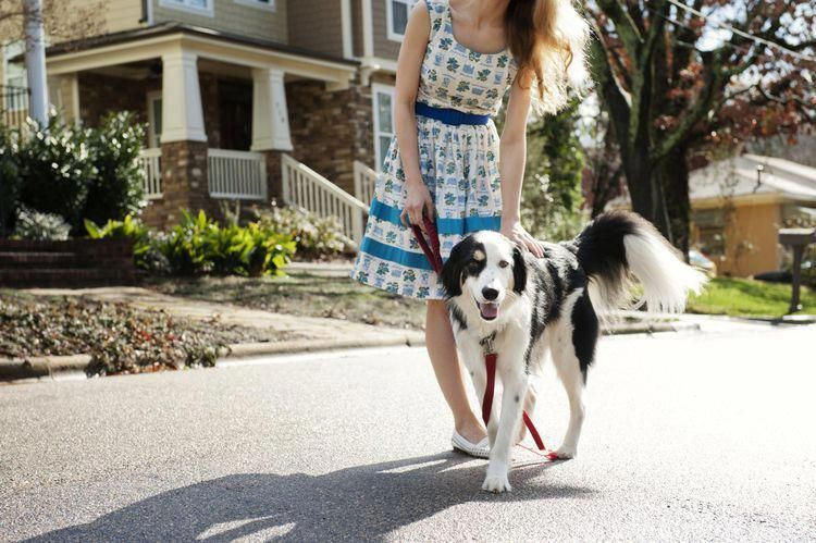 how to train a dog to walk on a leash with a clicker