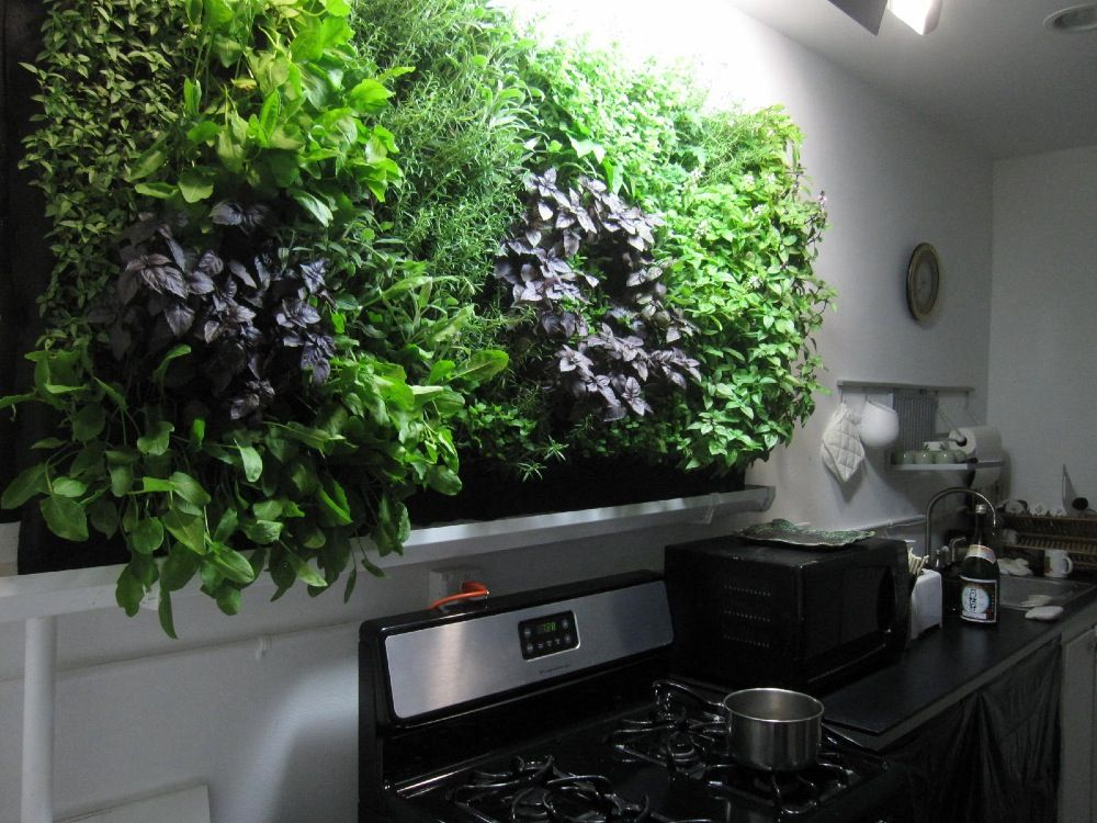 Diy indoor hydroponic herb garden greenliving mi Herb garden wall ideas