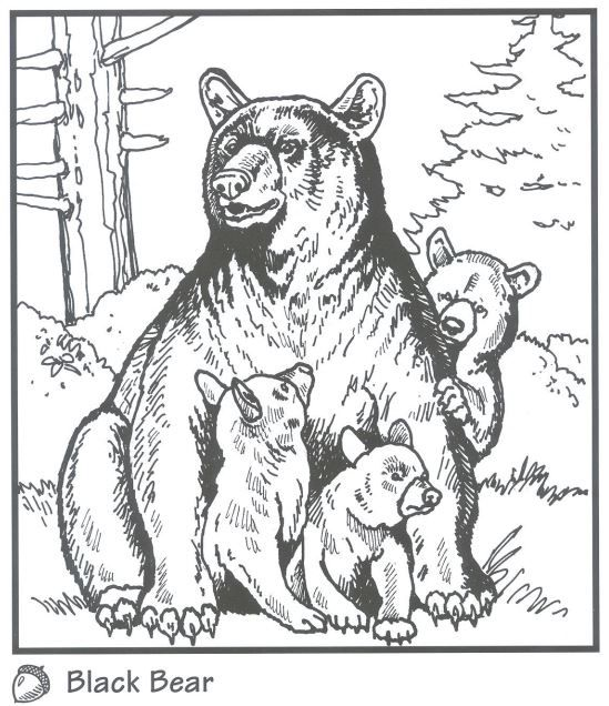 Backyard Animals and Nature Coloring Books Free Coloring Pages | Pintar