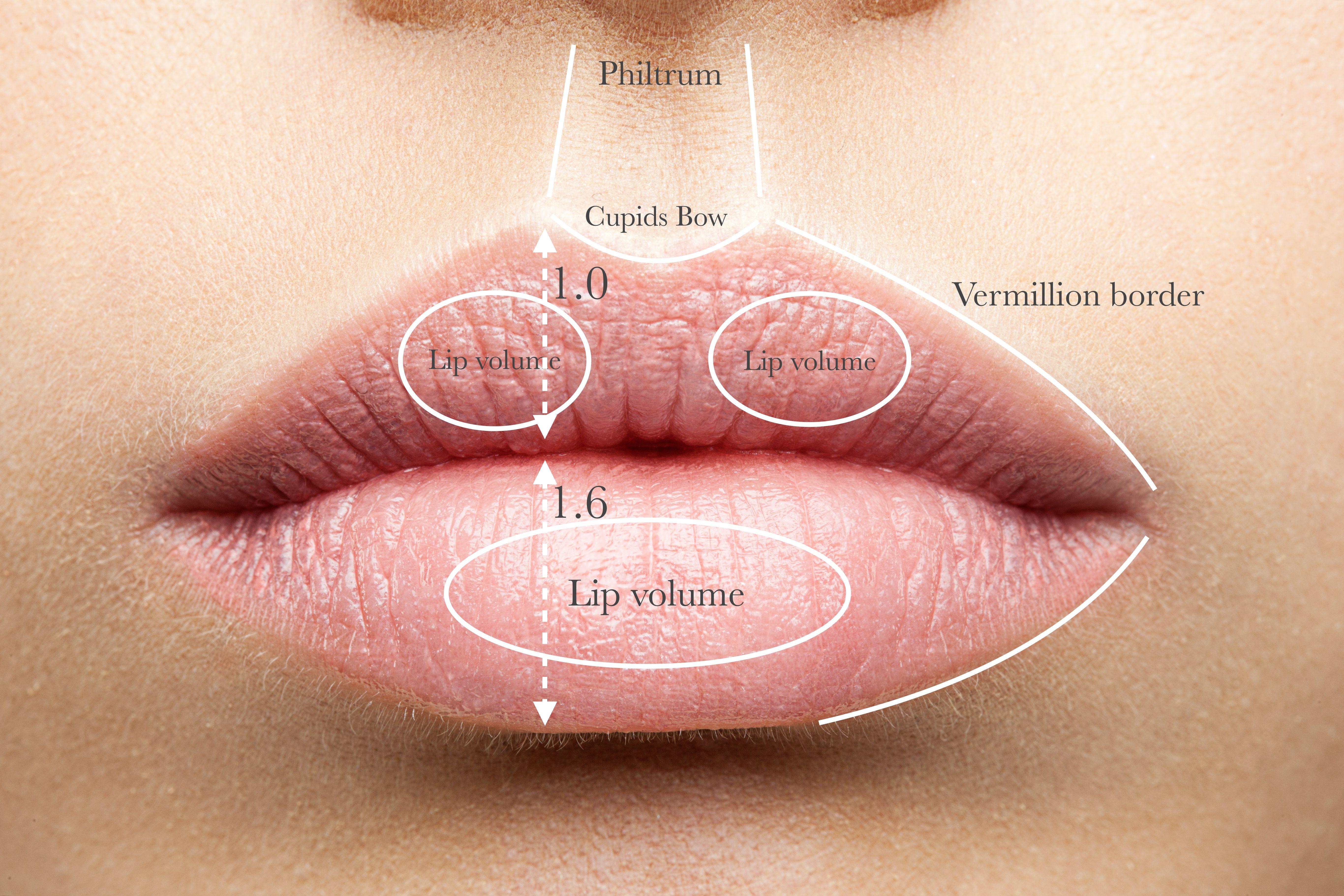 lips-with-anatomy1.jpeg (5464×3643) | Lips Anatomy Research ...