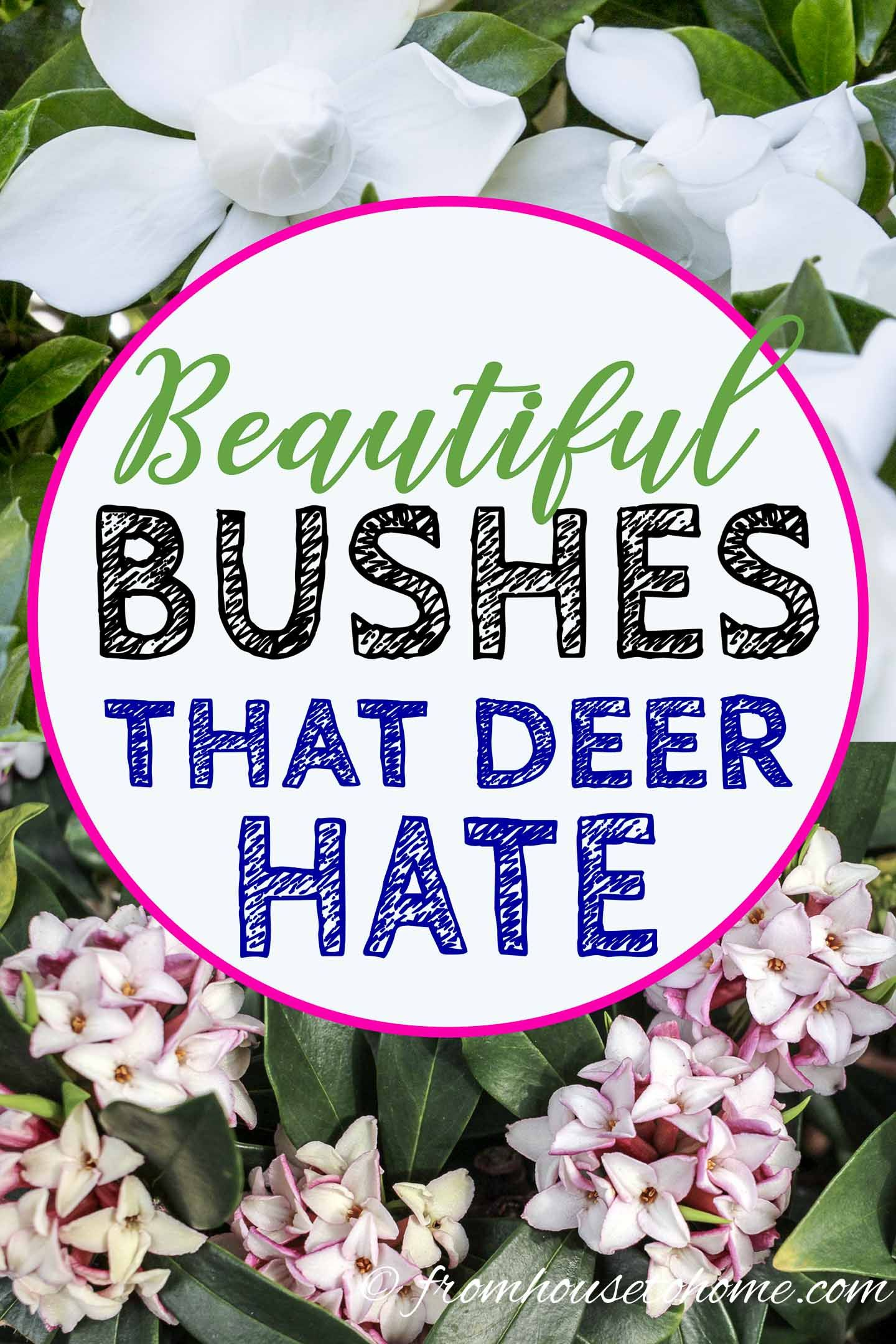 15 Beautiful Deer Resistant Shade Plants To Grow In Your Garden is part of Deer resistant shade plants, Shade shrubs, Shade plants, Deer resistant plants, Deer resistant flowers, Deer resistant perennials - Find out how to keep your garden looking beautiful with these deer resistant shade plants that will help to prevent the animals from dining on your flowers