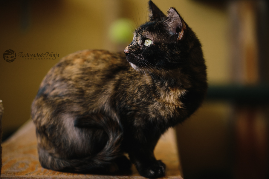 Home Pets Pet Portraits Cat Traps