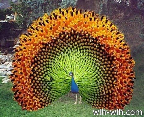 طيور Birds صحيفة رمز السلام Animals Beautiful Colorful Birds Beautiful Birds