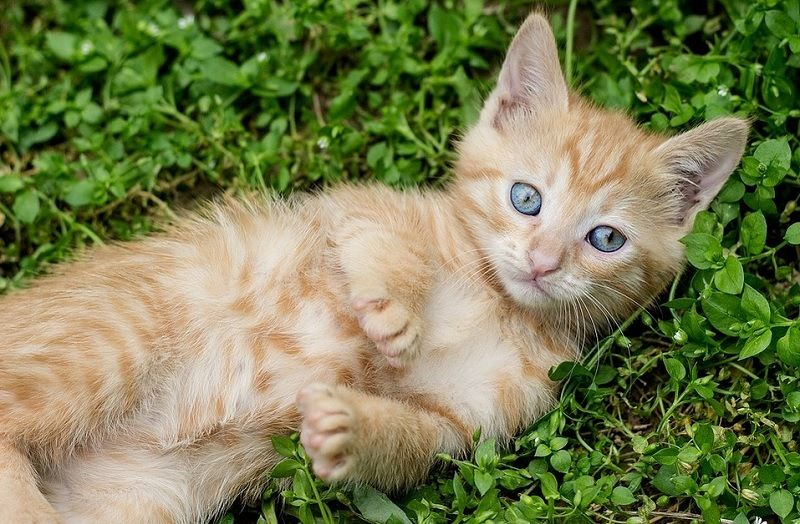 Kitten Can T Walk For Hind Legs Shows Others She Can Walk Again Animal Shelters Near Me Kitten Animal Shelter