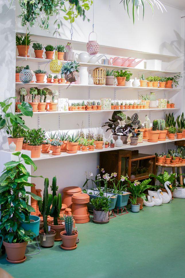 Wildernis in amsterdam design ideen in 2019 for Shop zimmerpflanzen