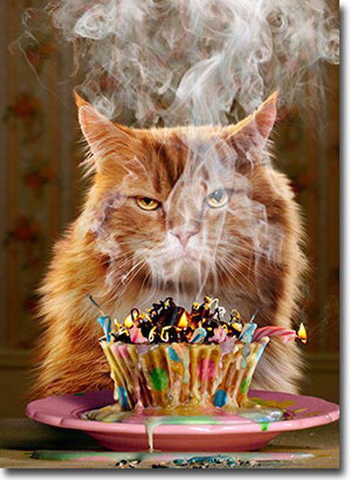 правило, поздравления с днем рождения кота смешные что