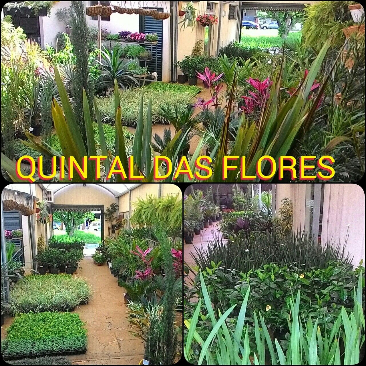 QUINTAL DAS FLORES PAINGUAS 949 CENTRO 3561-6526