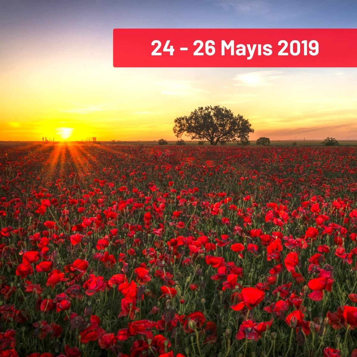 Isparta Rose Festival And Lake District Tour From 24 26 May 2019 Isparta Rose Scented Products Harvest