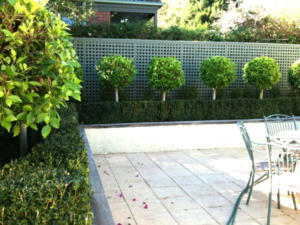 Simple Minimalist Garden Hedges Ideas Small trees Garden hedges