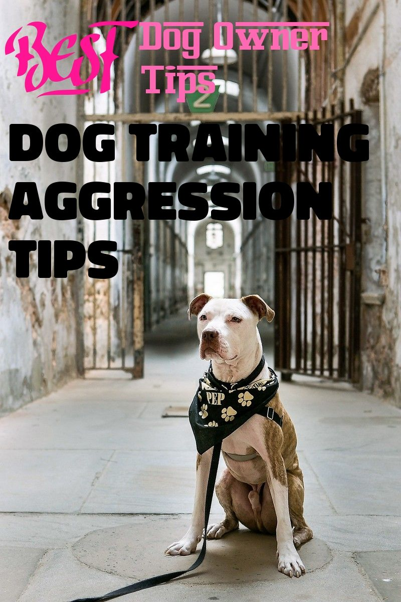 Learn All About Dog Training Aggression Tips In This Posting