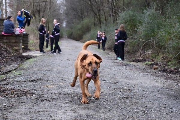 Dog Steps Out To Pee, Ends Up Running A Half Marathon