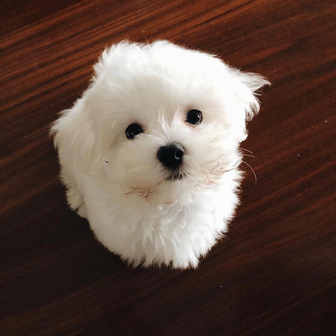 Cute Animals Easy To Draw Cute Baby Animals Cute Animals Animals