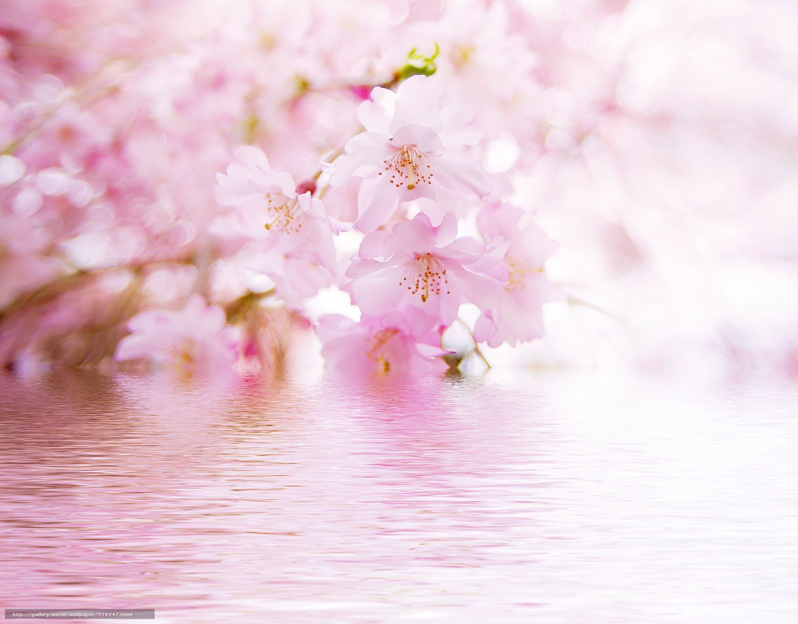 Download Wallpaper Blurring Reflection Water Flowers Free