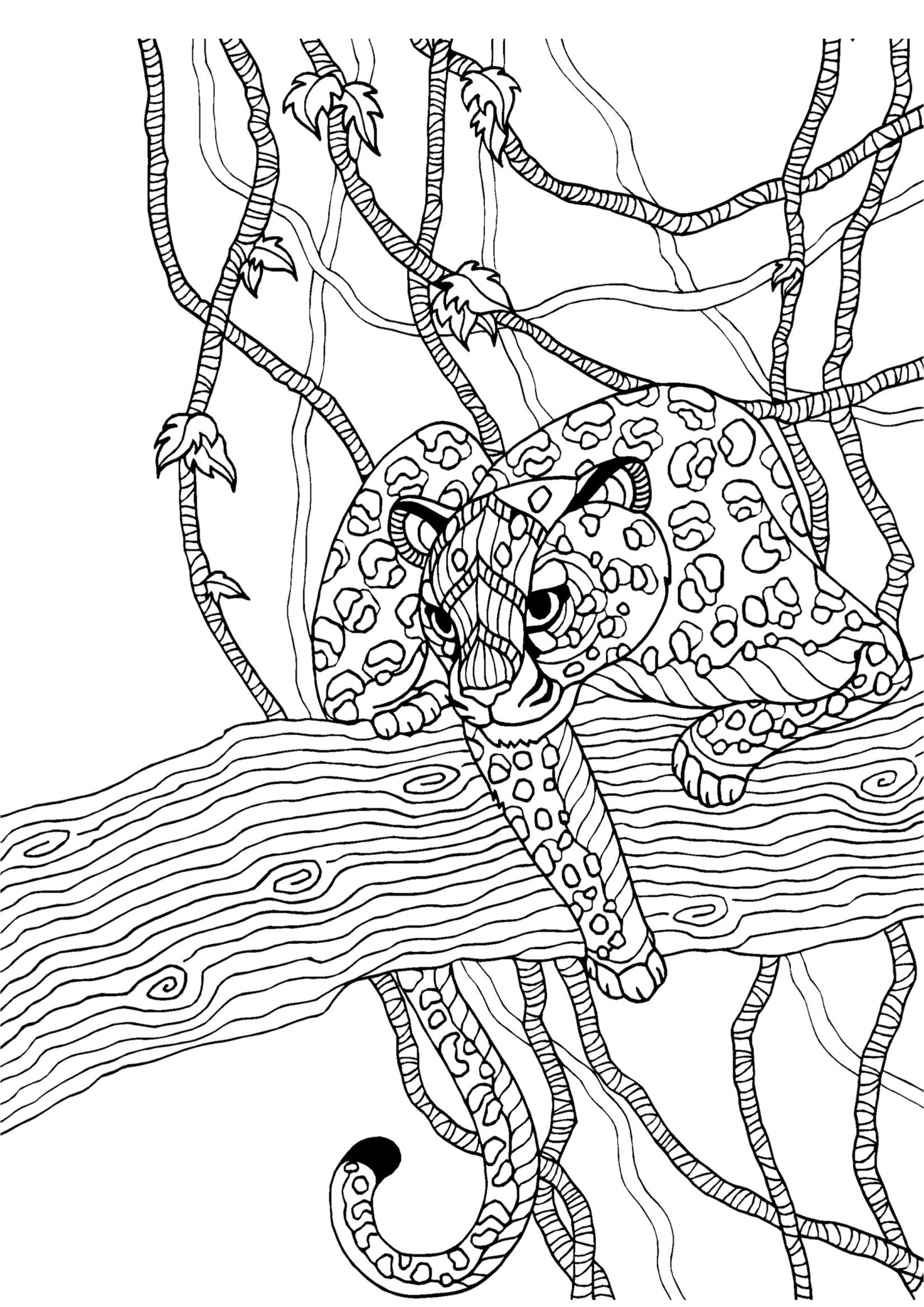 Cheetah adult colouring page