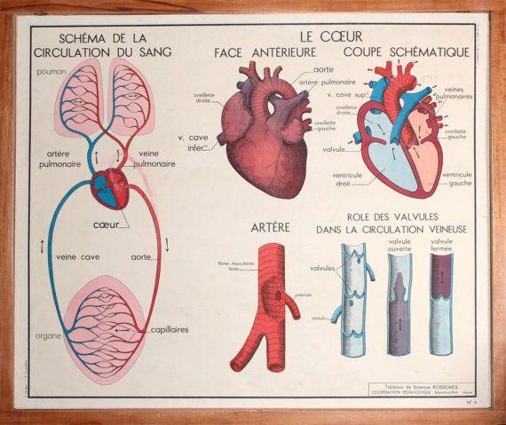 anatomie corps humain vintage affiche scolaire par. Black Bedroom Furniture Sets. Home Design Ideas