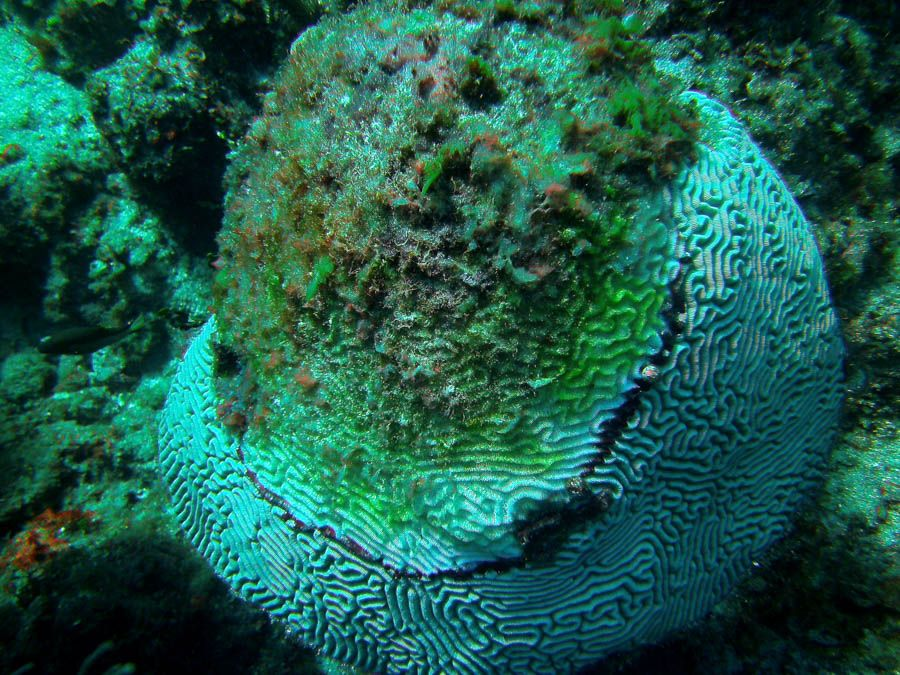 Corals Off The Coast Of Bakers Bay Show Severe Signs Of Stress And Disease Fertilizers Should