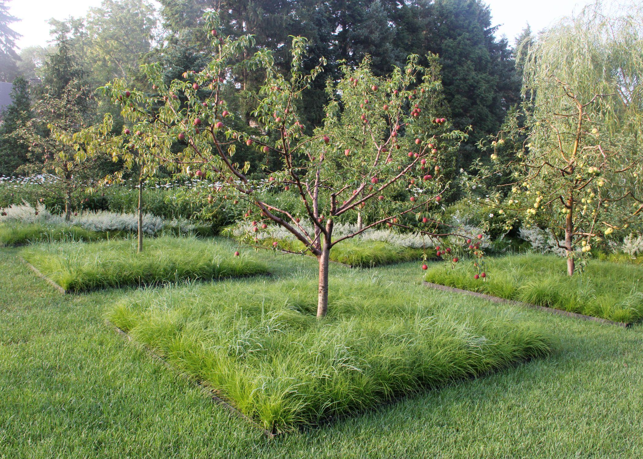 Underplanting Fruit Trees Fruit Trees Garden Design Fruit Tree Garden Fruit Garden