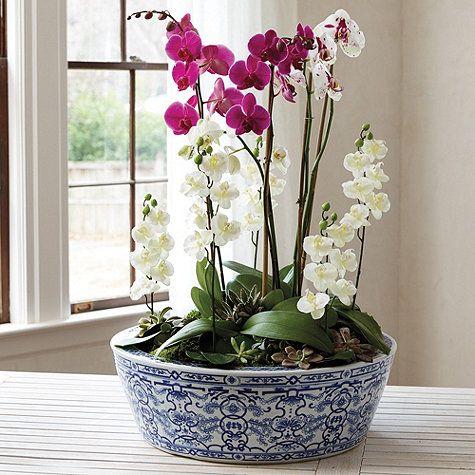 Blue White Chinoiserie Planter In 2019 Vase