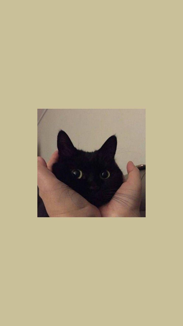 Lockscreens Icons Cats Lockscreens Like Or Reblog If You Save Cute Cat Wallpaper Cat Wallpaper Funny Cat Wallpaper