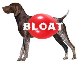 Dog Bloat And Gastric Torsion Crazy Dog Lady Dogs Crazy Dog
