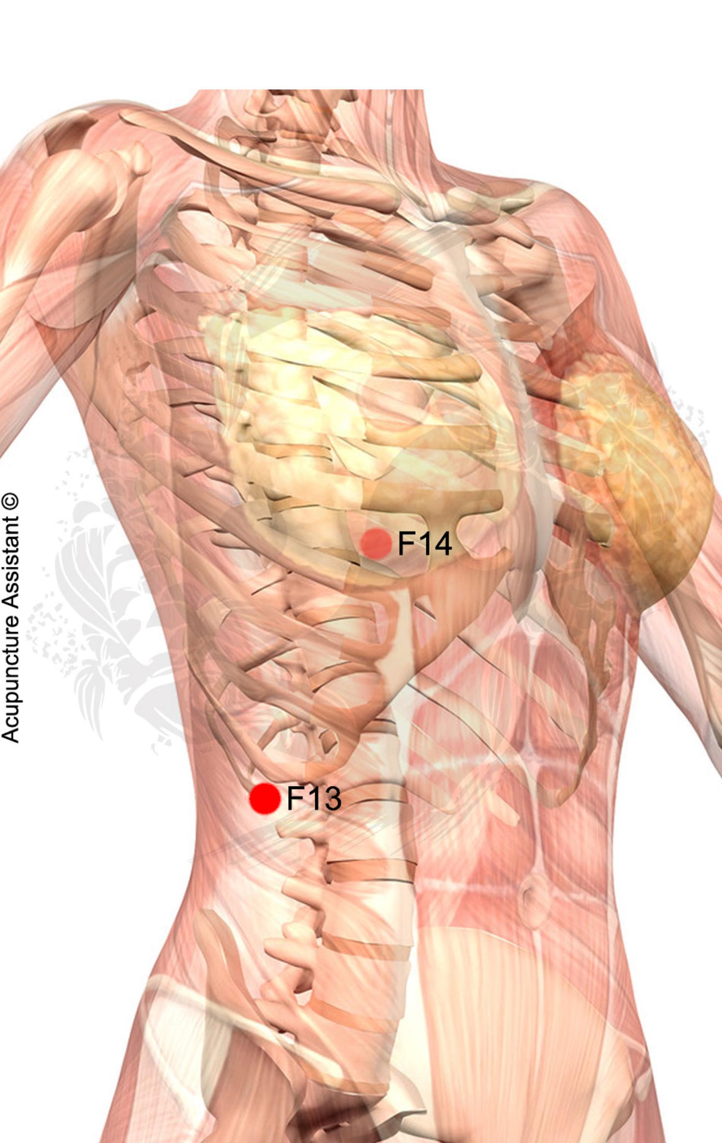 F13-Zhangmen-ponto-de-acupuntura | Bem estar | Pinterest ...