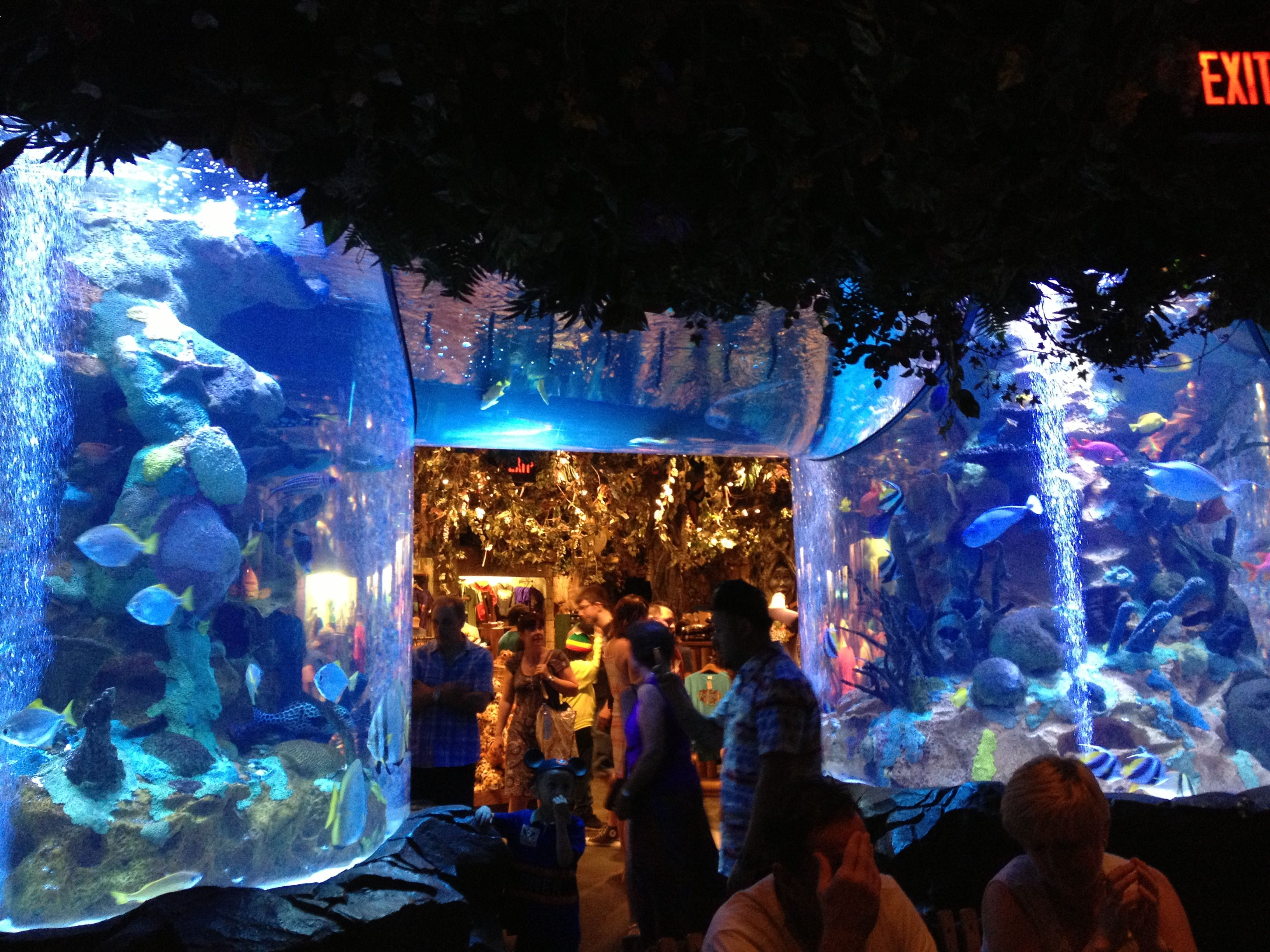 Rainforest Cafe Orlando Fl Downtown Disney Aquariums