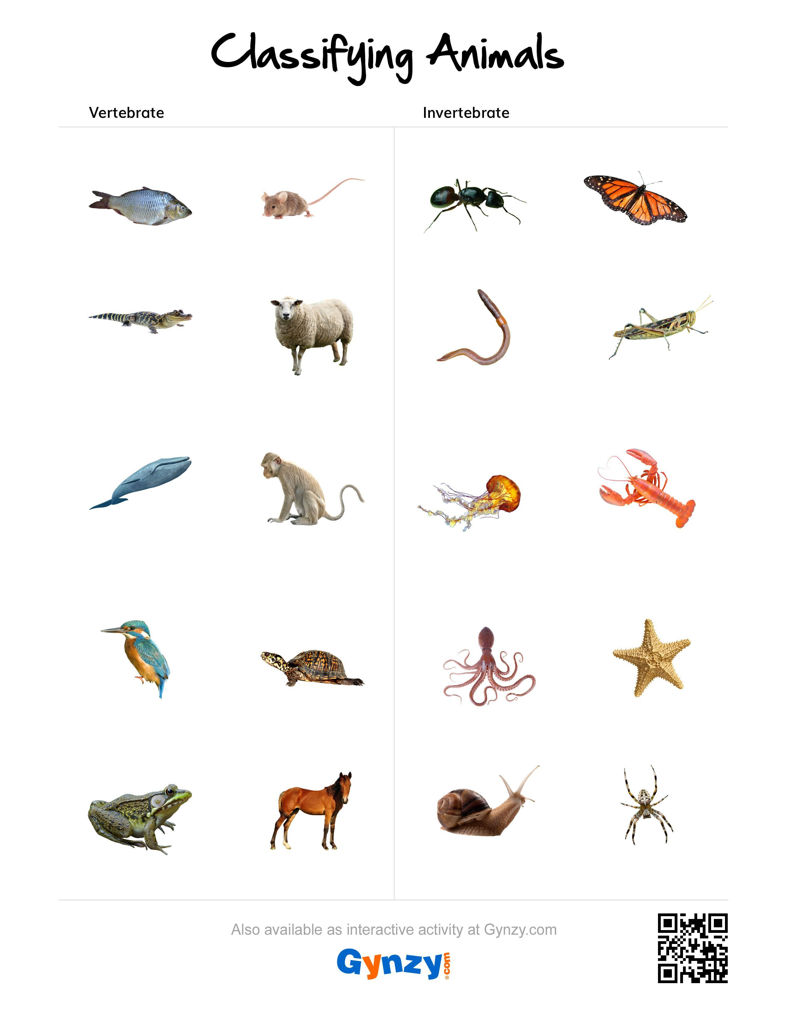 hight resolution of Animal Group Worksheet   Printable Worksheets and Activities for Teachers